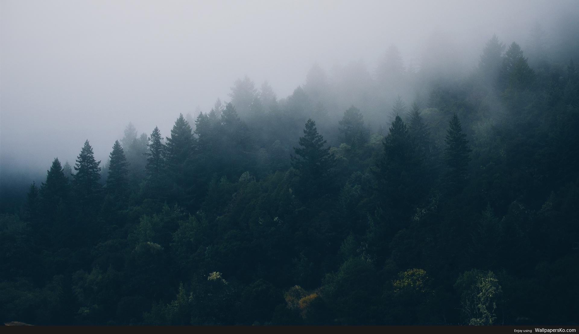 1920×1080 Wallpaper Forest