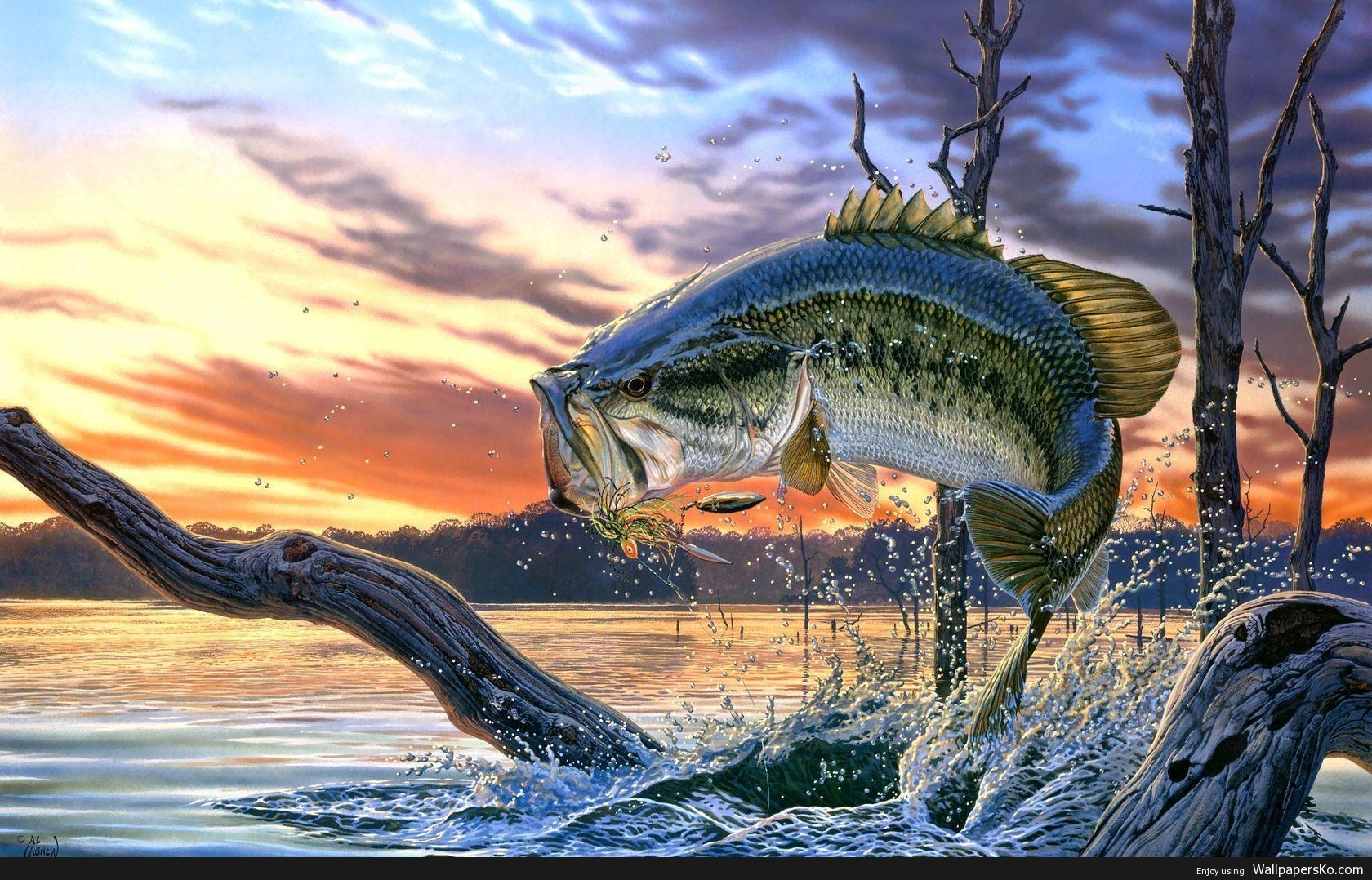 Bass Fishing Picture Wallpaper