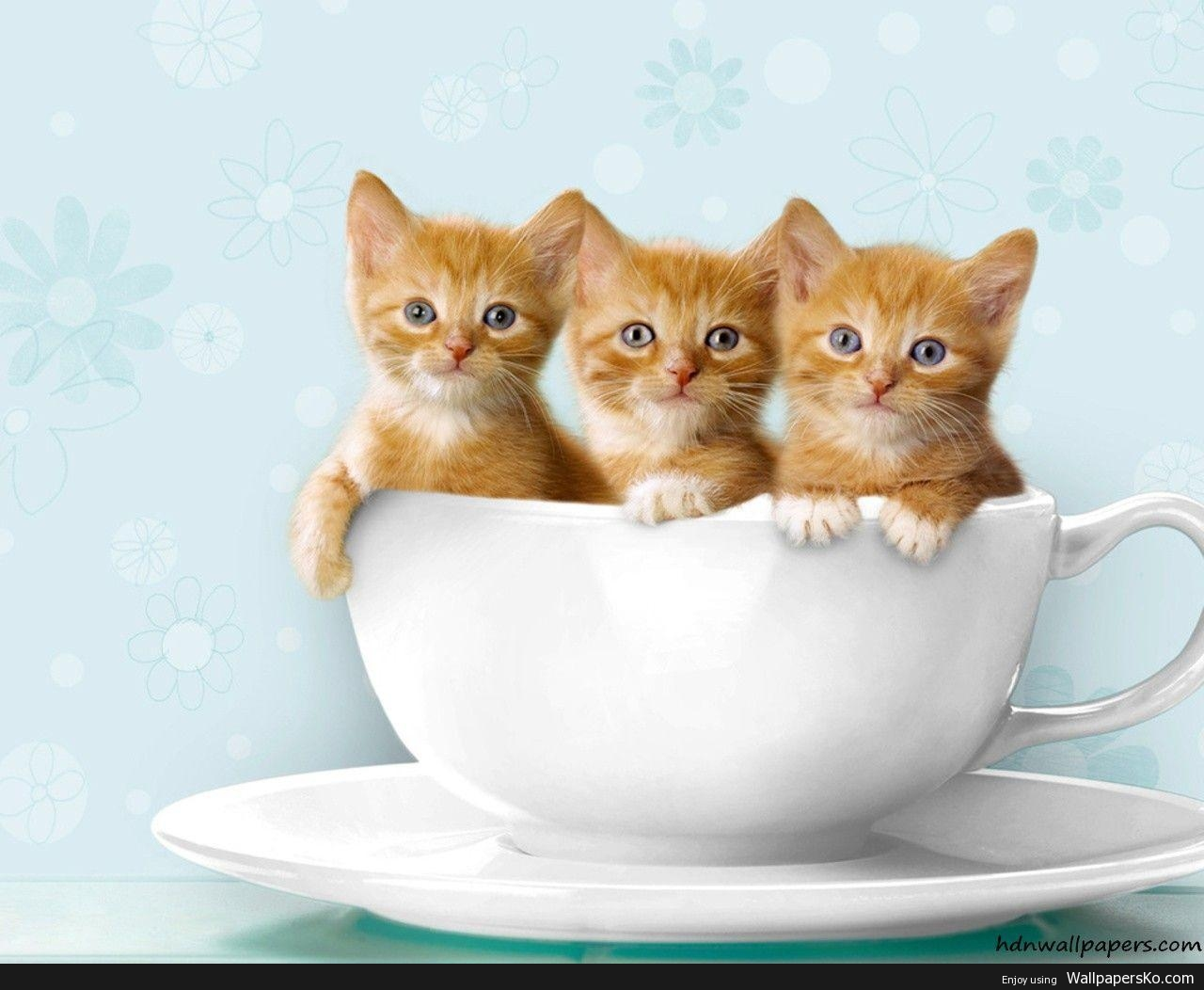 Download Kitten Picture