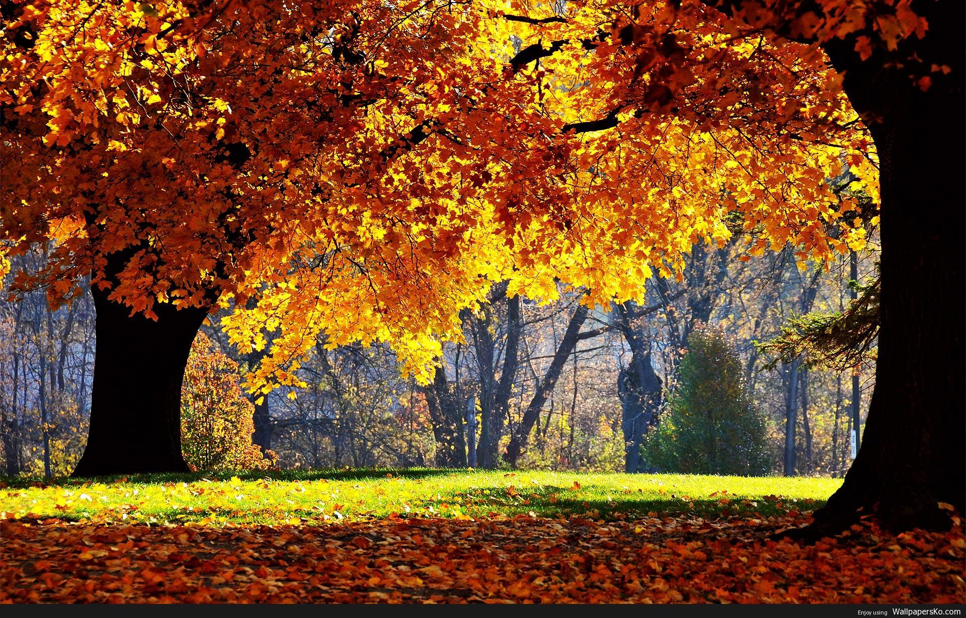 Fall Desktop Image