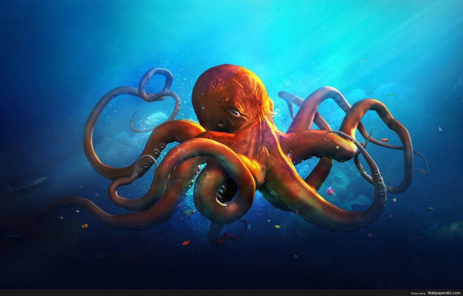 hd octopus wallpaper | hd wallpapers download