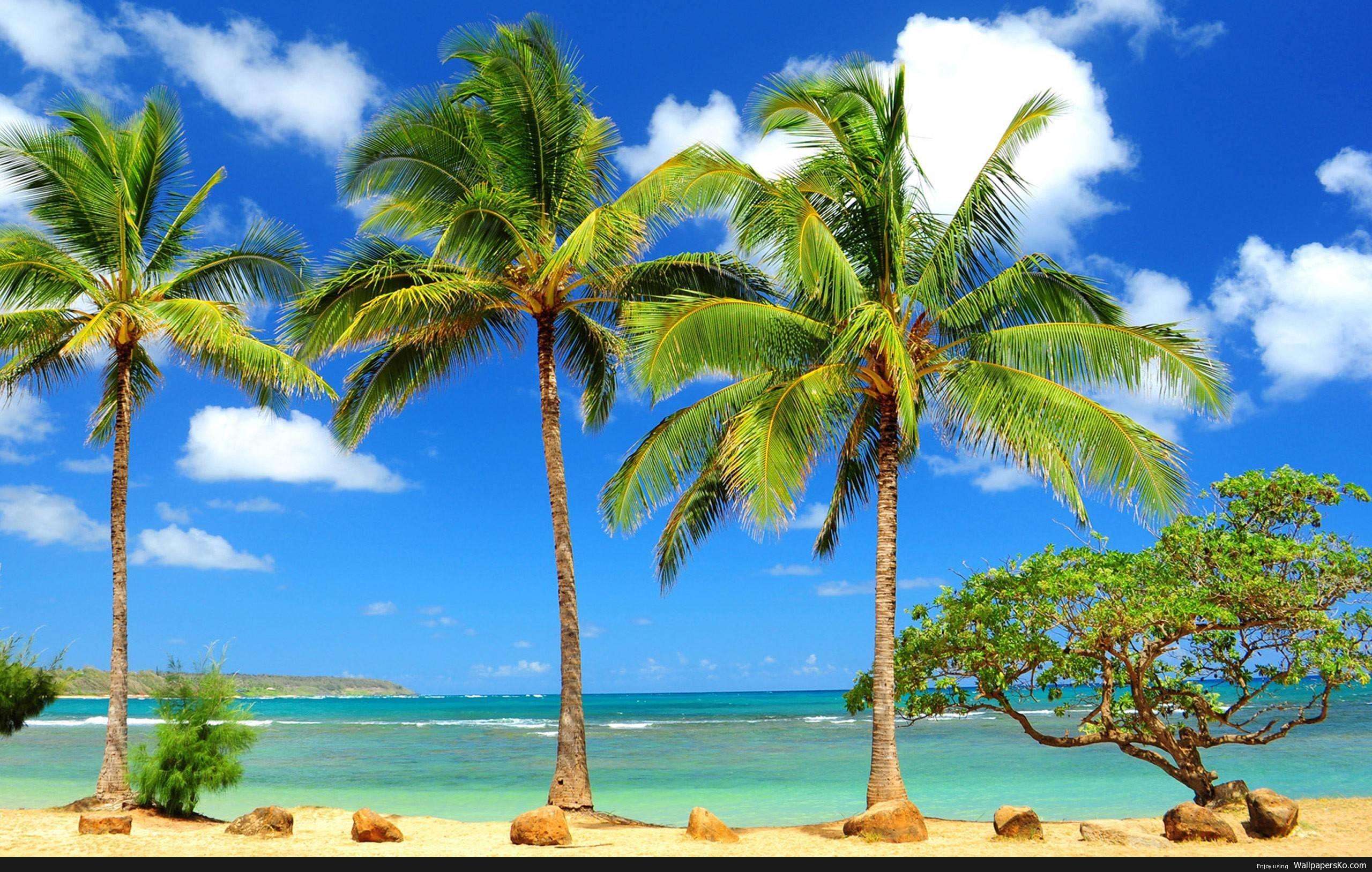 palm tree hd wallpaper