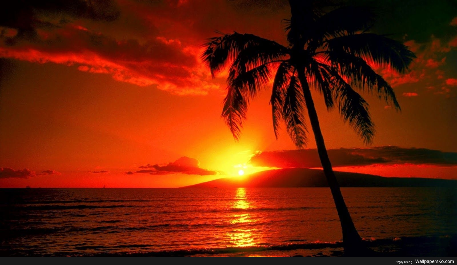 palm trees sunset wallpaper
