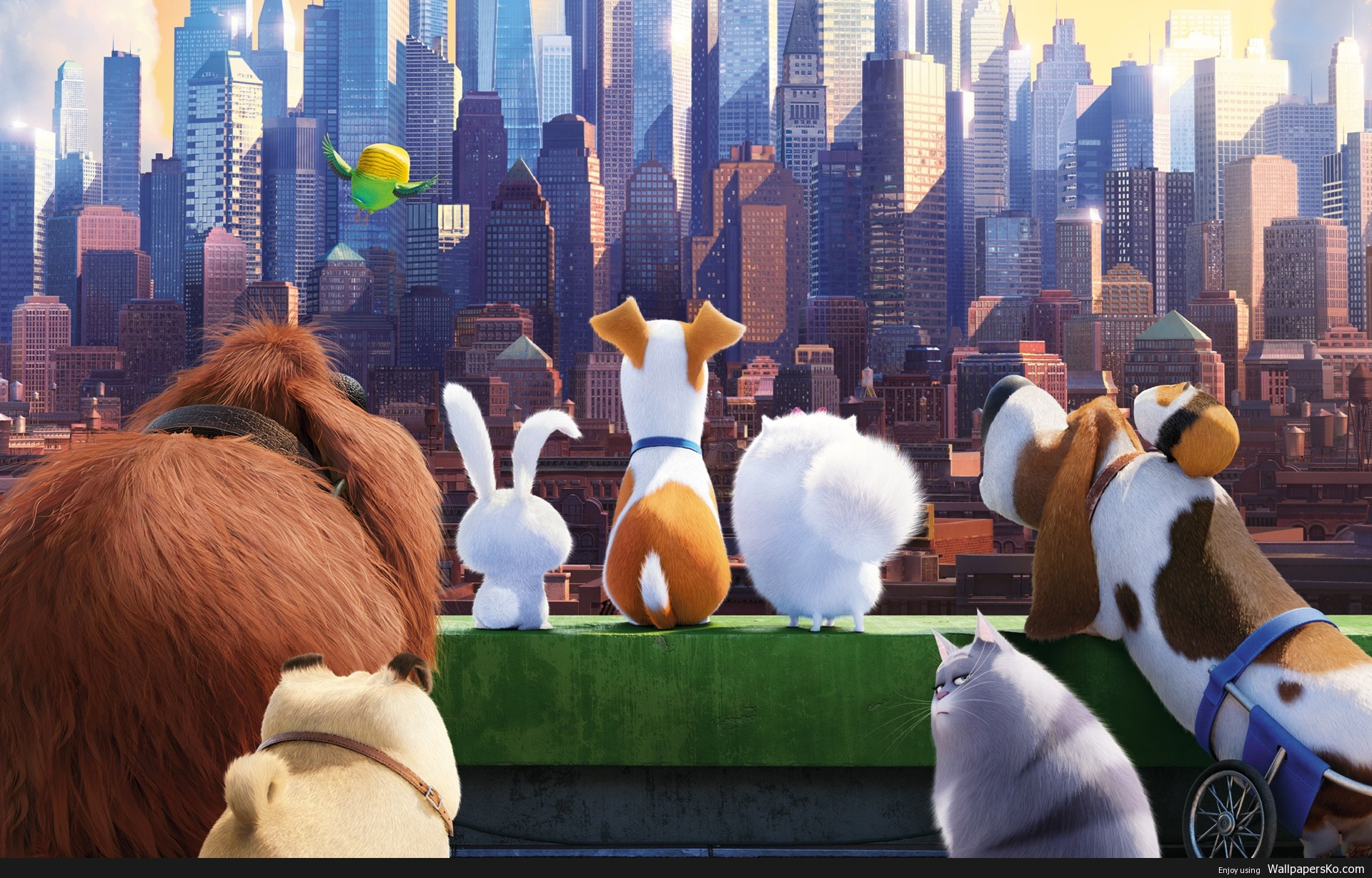 pets movie wallpaper