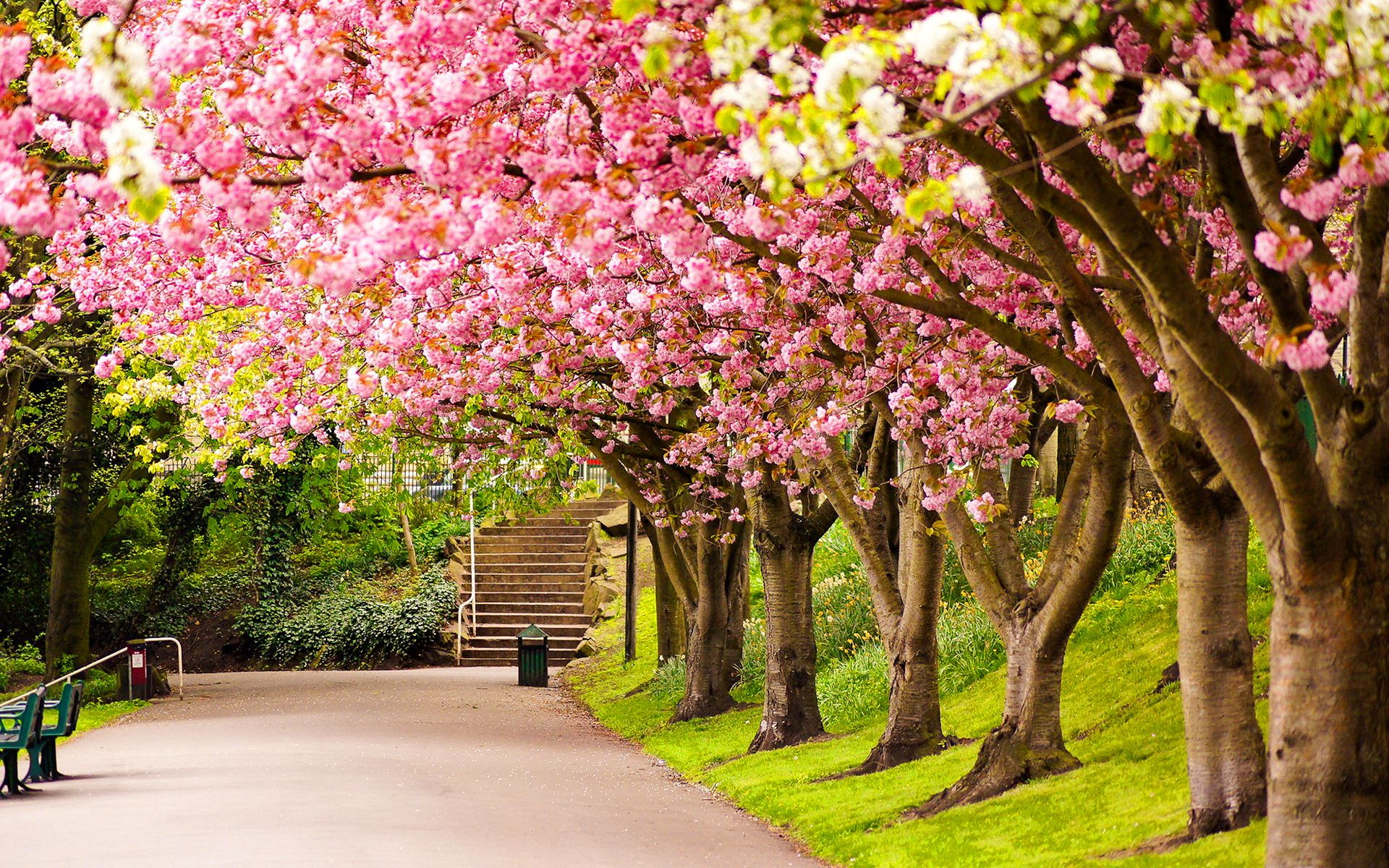 Spring Park Wide Desktop Background wallpaper