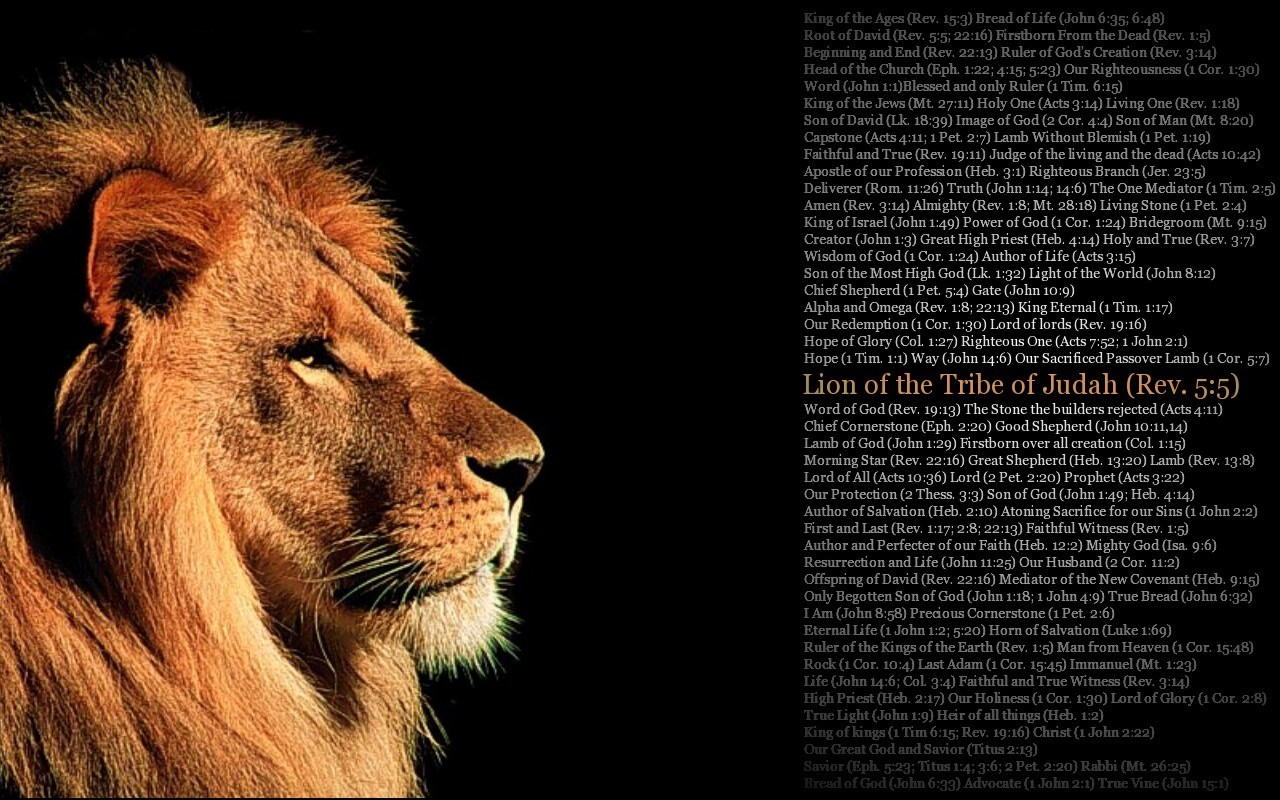 picture of lion of the tribe of judah