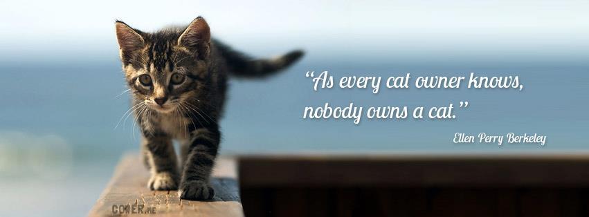 cat fb cover