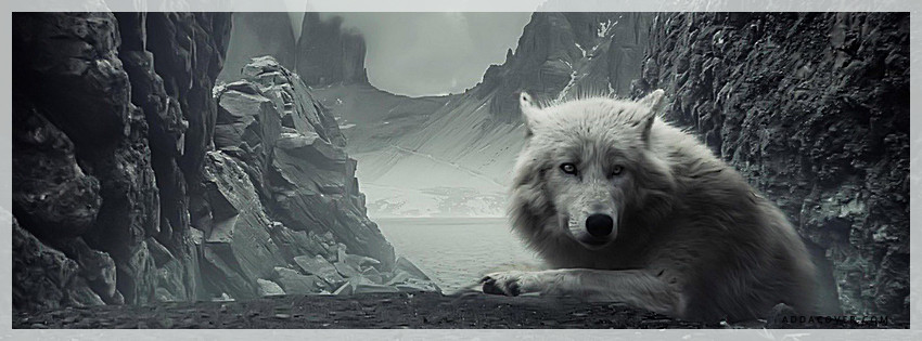 wolf fb cover photo