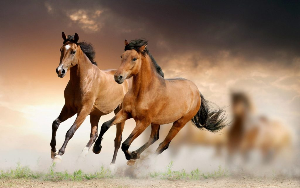 desktop wallpaper horse