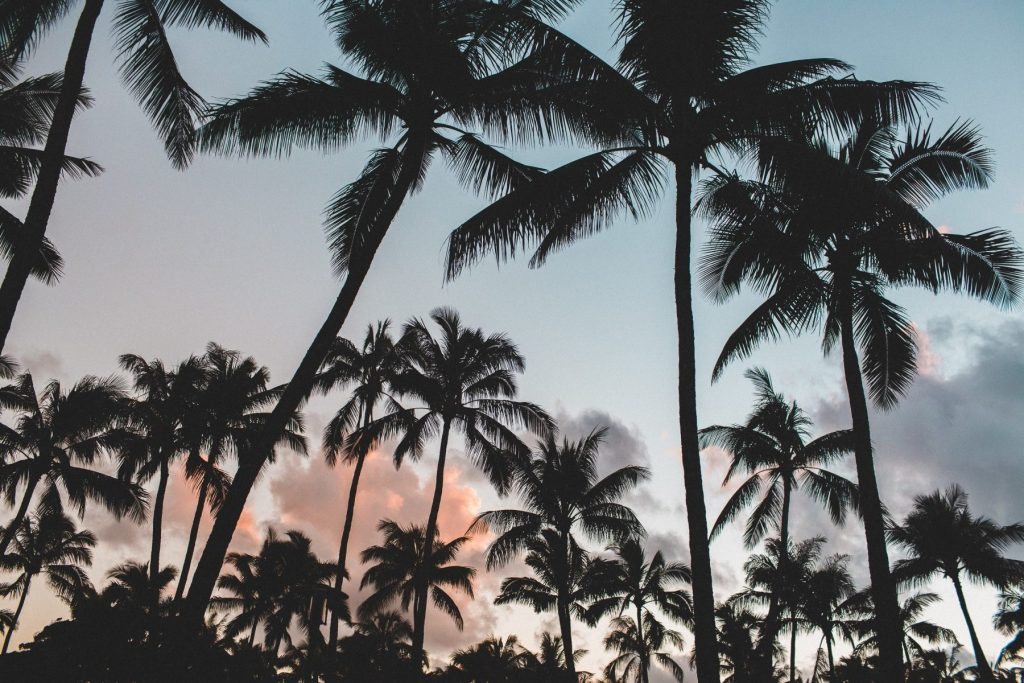 Desktop Wallpaper Palm Trees