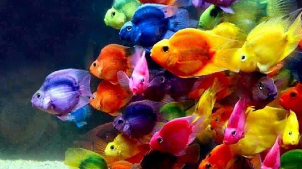 Pics Of Colorful Fish