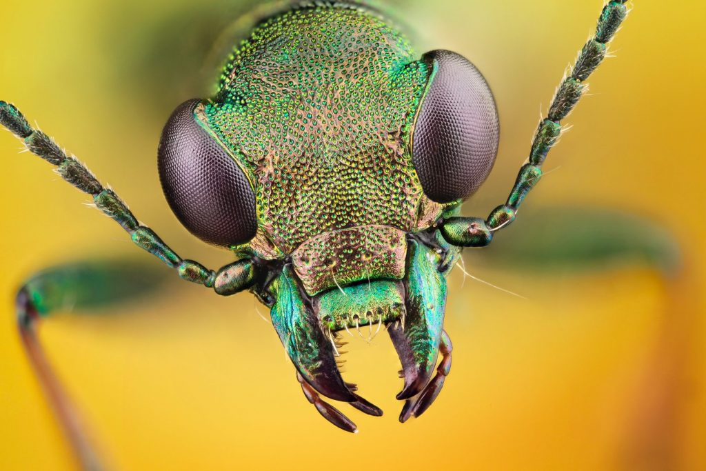 insect 4k