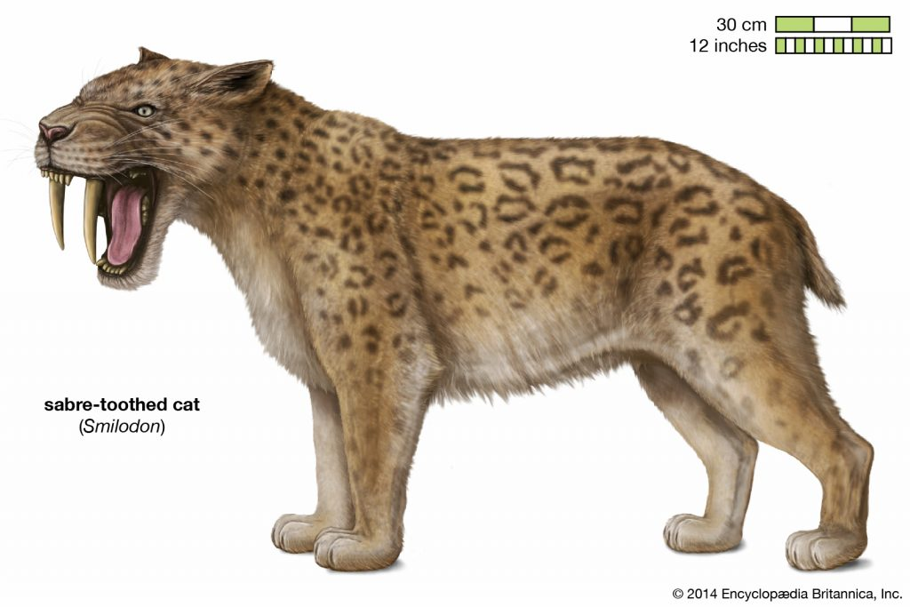 saber toothed tiger pictures
