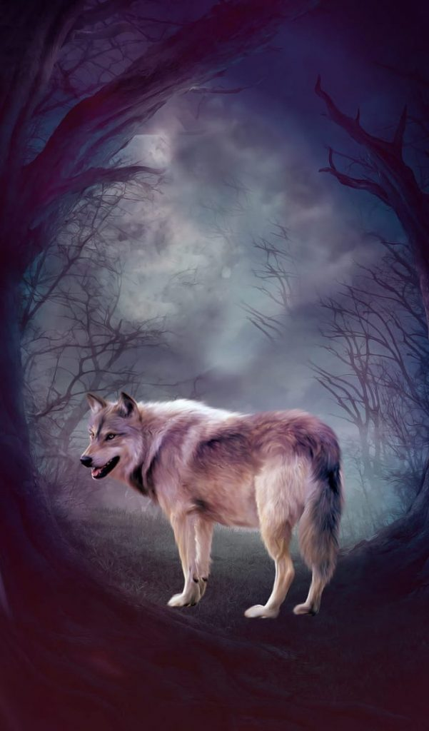 wallpaper wolf
