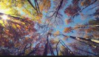 4k background images
