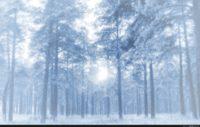Anime Snow Forest