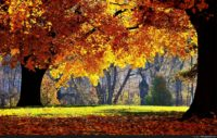 Autumn Wallpaper For Desktops