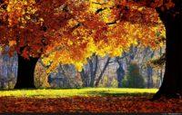 Autumn Wallpaper For Desktops