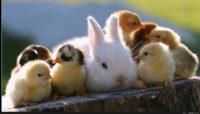 Baby Animals In Springtime