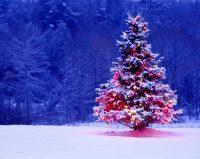 Christmas Tree Wall Paper