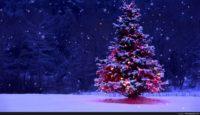 Christmas Winter Pics