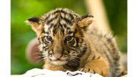 Cute Baby Animal 4k