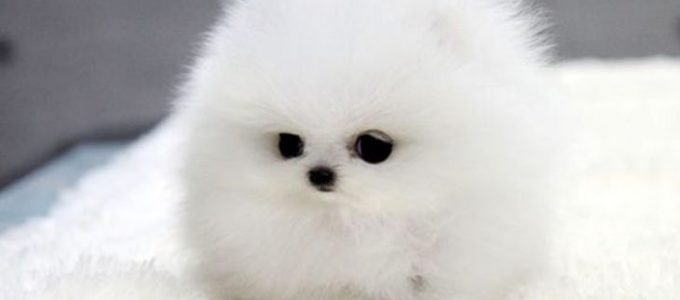 Cute Images Of Puppies