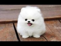 Cute Pics Of Puppies And Dogs