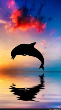 Dolphin Wallpaper For Iphone