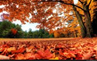 Fall Leaves Background For Computer