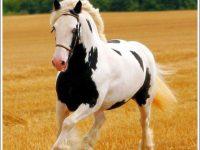 Free Horse Screen Saver