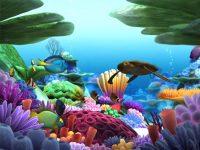 Ocean Life Screen Savers