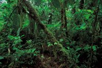 Pictures Of Tropical Rainforests