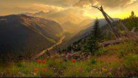 Wallpaper 4k Nature