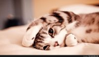 Wallpaper Cute Animals