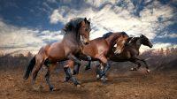 horse desktop theme