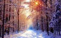 snow scene wallpaper
