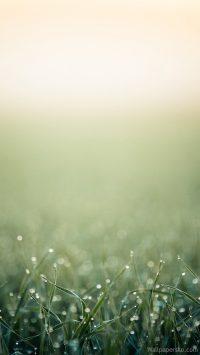 spring iphone wallpaper minimalist
