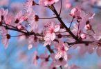 spring season 4k