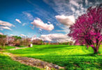 Spring Desktop Wallpaper HD free