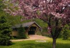 Spring Garden Wallpaper Wallpaper
