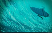 the shallows wallpaper
