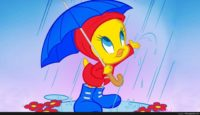 tweety bird spring wallpaper